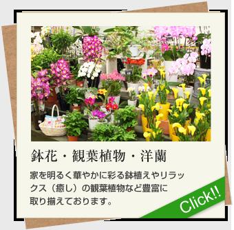 鉢花・観葉植物・洋蘭