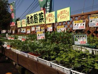 春の野菜苗