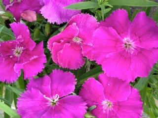 秋の花壇・寄せ植えのお花がた~くさん♪