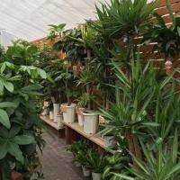 インテリアやギフトにも人気の観葉植物